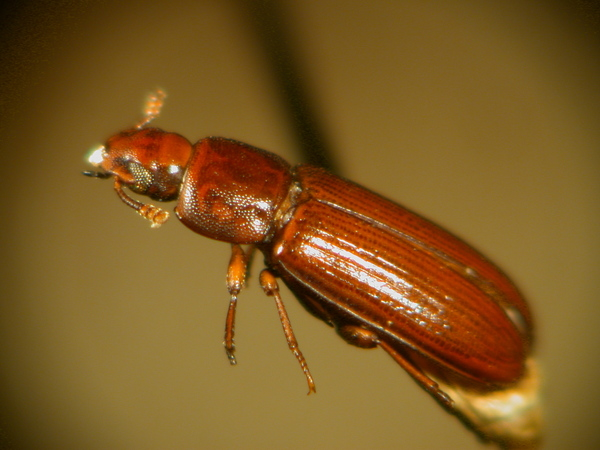 Five Of The UK's Most Common Pests And How To Prevent And Control Them