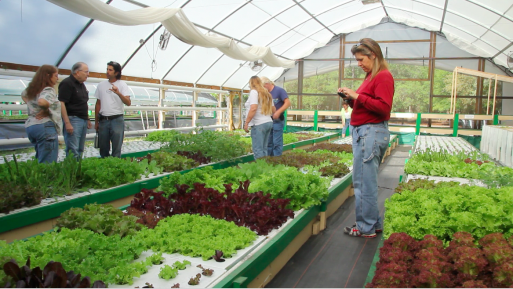 Proper Inputs Given To Indoor Plants Can Improve Agricultural Yield
