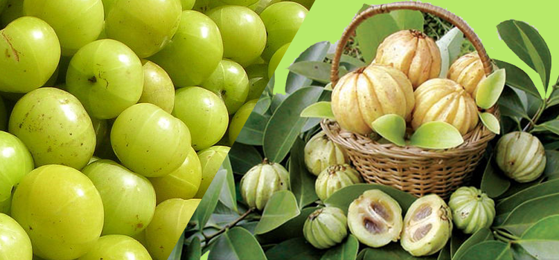 What Are The Benefits Of Consuming Garcinia?