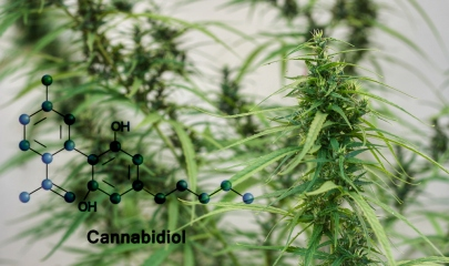 How Do Cannabinoids Work?