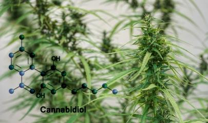 How Do Cannabinoids Work?